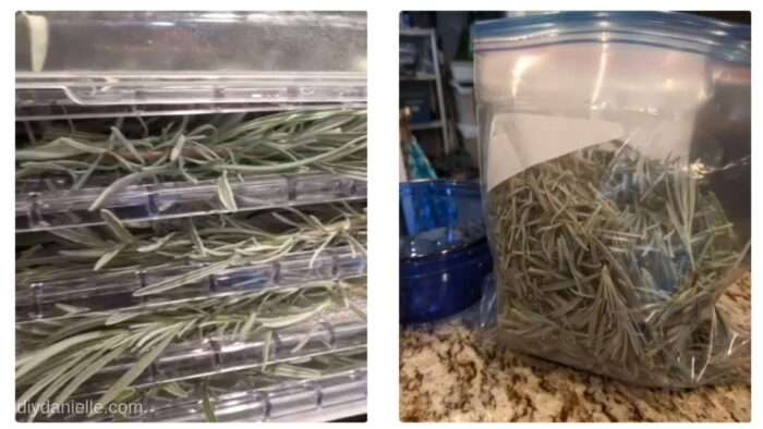 Left Photo: Lavender laid on trays in a dehydrator. Right Photo: Dried lavender stored in a sealed bag.